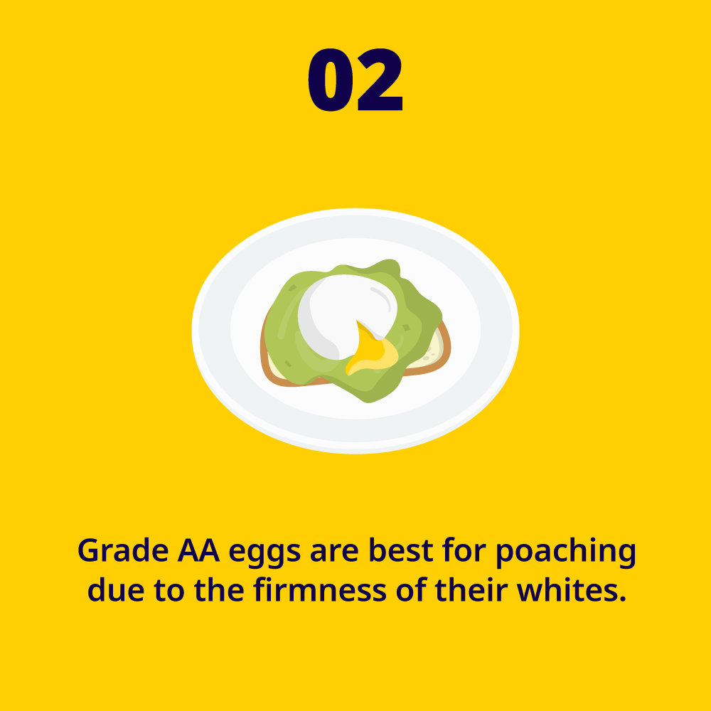 EggFact2