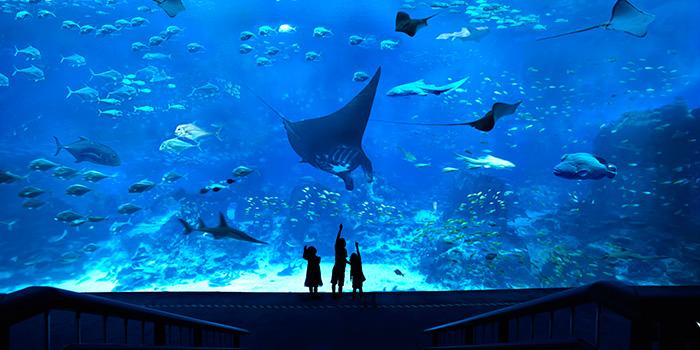 sea aquarium booking
